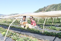 Strawberry Farm, Baguio