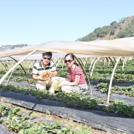 Strawberry Farm, Baguio