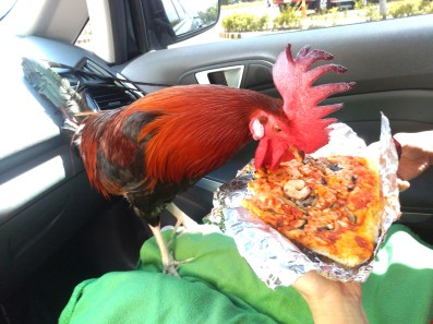Pizza Chocobo